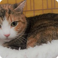 Domestic Shorthair Cat for adoption in Painted Post, New York - Zoe