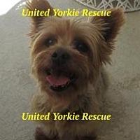 Adopt A Pet :: Lena - The Village, FL