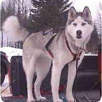 Adopt A Pet :: Bailey - Kettle Falls, WA