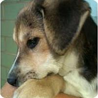 Adopt A Pet :: Derby - Courtesy post - Glastonbury, CT