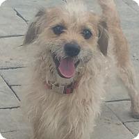 Adopt A Pet :: Mr. T - New Windsor, NY