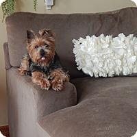 Adopt A Pet :: Annie - West Deptford, NJ