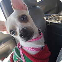 Adopt A Pet :: Rudolph - Las Vegas, NV