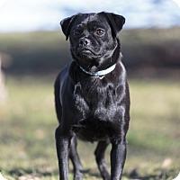 Adopt A Pet :: Bindi - Ile-Perrot, QC
