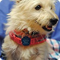 Adopt A Pet :: Peppermint Patty-Pending Adopt - Omaha, NE