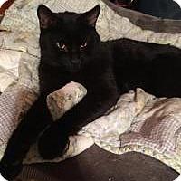 Adopt A Pet :: Denzel - Sedalia, MO