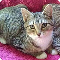 Adopt A Pet :: Dante - McDonough, GA