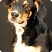 Adopt A Pet :: Rosario - Newland, NC