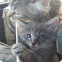 Adopt A Pet :: Moana - Minot, ND