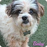 Adopt A Pet :: Baby Girl - Youngwood, PA
