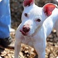 Adopt A Pet :: Paddie - Tinton Falls, NJ