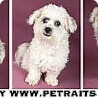 Adopt A Pet :: C.J. - Chicago, IL