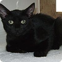 Adopt A Pet :: Sommer - Delray Beach, FL