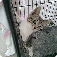 Adopt A Pet :: Bobbie - lake elsinore, CA