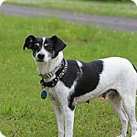 Adopt A Pet :: Sally - Hastings, NY