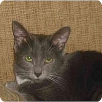 Adopt A Pet :: Chandler (DS) - Little Falls, NJ