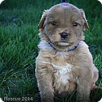Adopt A Pet :: Arby - Broomfield, CO