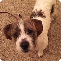 Adopt A Pet :: Dylan - Bedminster, NJ
