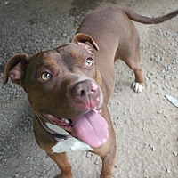 Adopt A Pet :: Aphrodite - Monroe, CT
