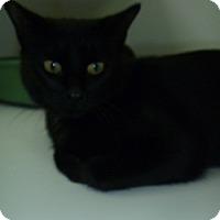 Adopt A Pet :: Leah - Hamburg, NY