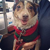 Adopt A Pet :: Butterfinger - Pompton Lakes, NJ