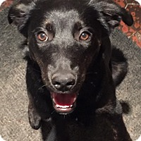 Adopt A Pet :: Lola - Pierrefonds, QC