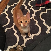 Adopt A Pet :: Trouble - Chesterfield Township, MI