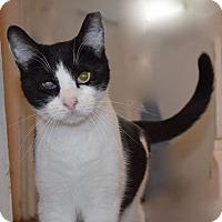 Adopt A Pet :: Eddie - Adoption Pending - Horsham, PA