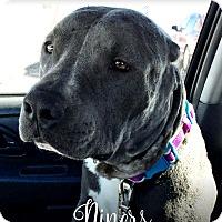 Adopt A Pet :: Niners - Tucson, AZ