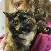 Adopt A Pet :: Yagachi - Libby, MT