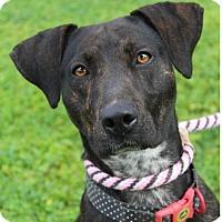 Adopt A Pet :: IRISH - Red Bluff, CA