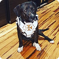 Adopt A Pet :: Bruce (COURTESY POST) - Baltimore, MD