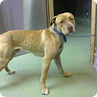 Adopt A Pet :: A669401 is at Devore Shelter - Beverly Hills, CA