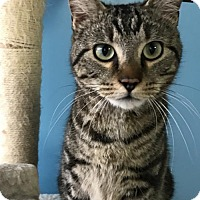 Adopt A Pet :: Marbles - Raytown, MO