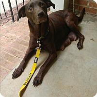 Adopt A Pet :: Molly - Monroe, NC