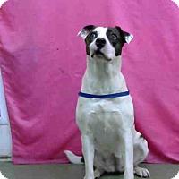 Adopt A Pet :: URGENT on 5/27@DEVORE San Bern - San Bernardino, CA