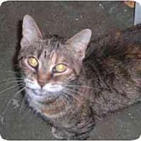 Adopt A Pet :: Flit - Lombard, IL