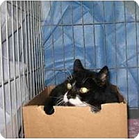 Adopt A Pet :: Donut - Westfield, MA