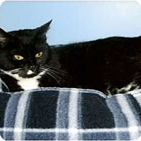 Adopt A Pet :: Millie - Medway, MA