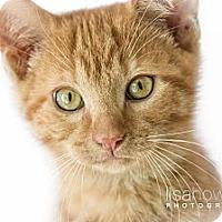 Adopt A Pet :: Indy - Montreal, QC