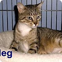 Adopt A Pet :: Meg - Medway, MA