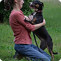 Adopt A Pet :: Lori - Somers, CT