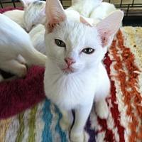 Adopt A Pet :: Porsche - Cerritos, CA
