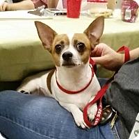 Adopt A Pet :: Crystal - Gainesville, FL