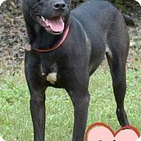 Adopt A Pet :: 382509 Quinn - San Antonio, TX