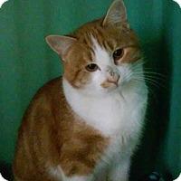 Adopt A Pet :: Isaiah - Franklin, NH