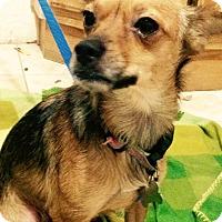 Adopt A Pet :: Scarlett (BH) - Santa Ana, CA