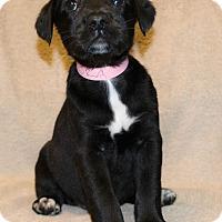 Adopt A Pet :: Gamora - Bellevue, NE