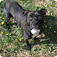 Adopt A Pet :: Charlie (FORT COLLINS) - Fort Collins, CO