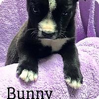 Adopt A Pet :: Bunny - Southington, CT